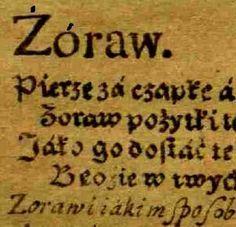 zoraw_popr1