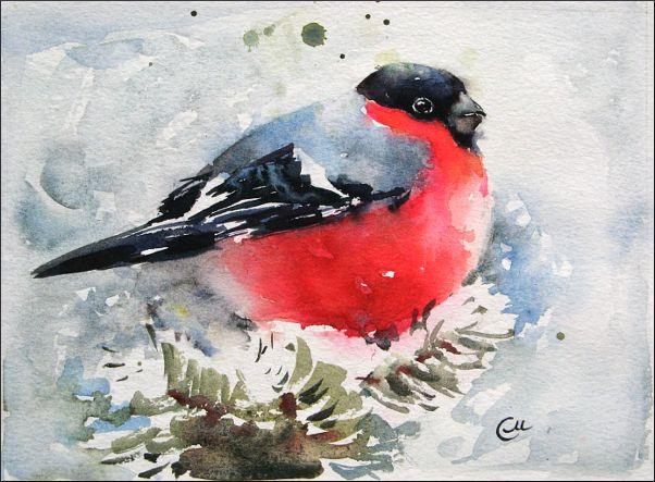 Gil Czerwona Bombka Imiona Ptaków