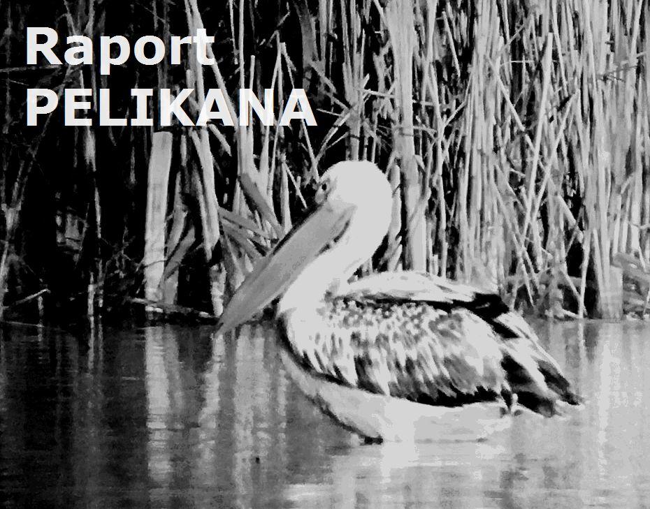 pelikan_cz_b